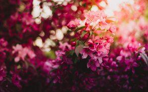 Hydrolaty kwiatowe – czym są i jak je stosować?