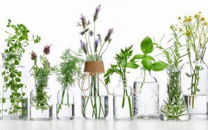 Kiedy i jak zbierać zioła do domowej apteczki?