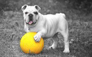 Pies na diecie, czyli zadbaj o wagę pupila