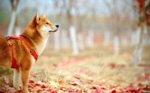 Obroże dla psiego pupila
